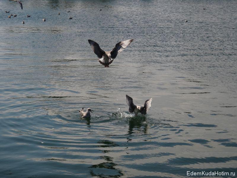 Зажравшиеся чайки :)