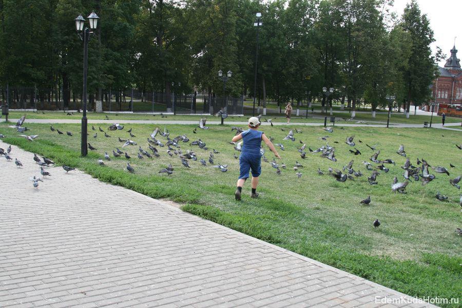 """Никита спровоцировал """"голубиное цунами""""! :)"""