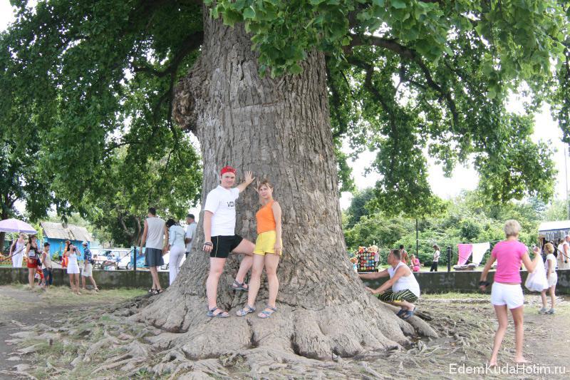 Мы у подножья тутового дерева