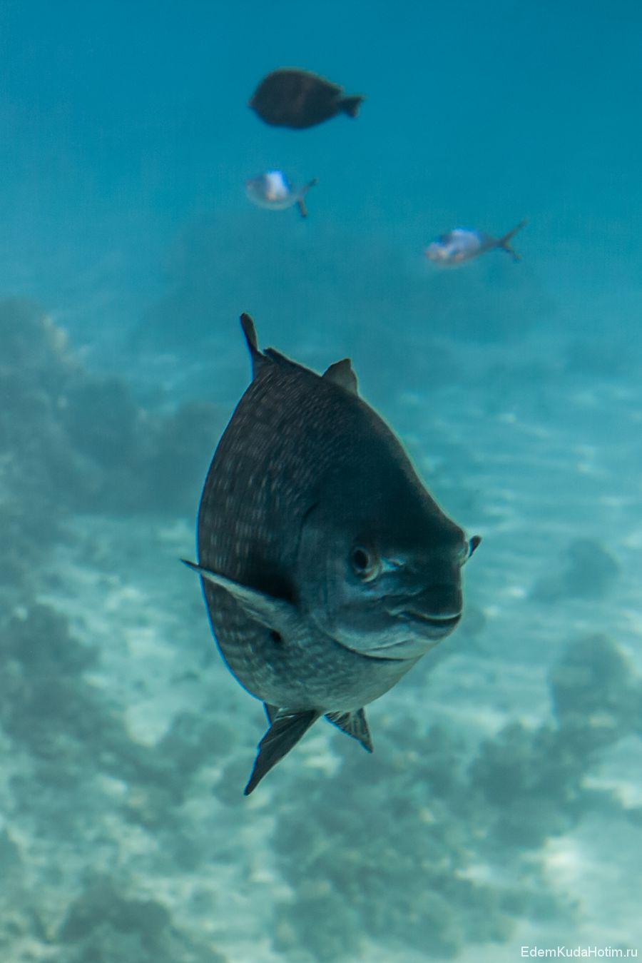 Позитивный морской лещ :)