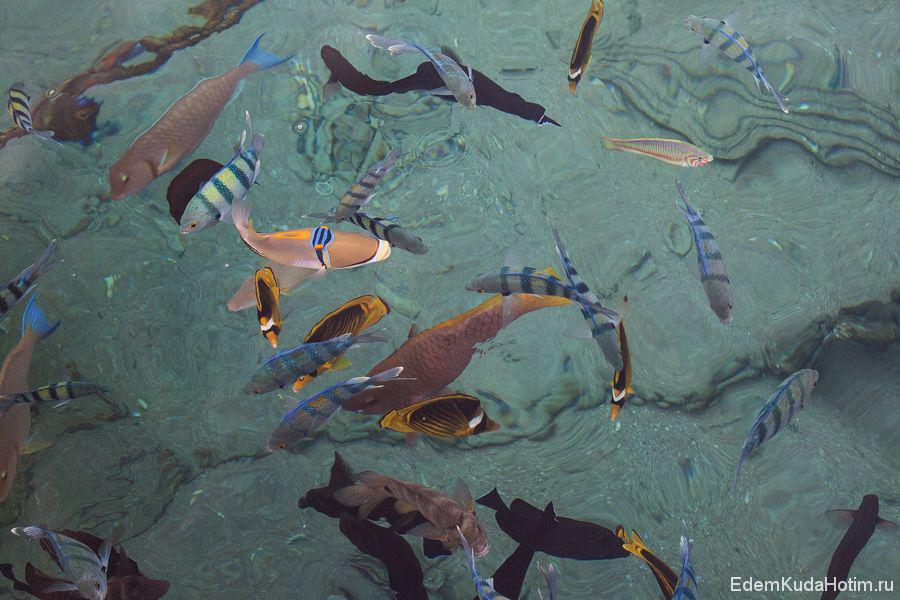 Слева вверху - довольно странная на вид рыбина ренекант пикассо (с глазами на лбу). Поскольку сначала не знали, что она называется ренекант пикассо. назвали ее просто - рыба-дура :)