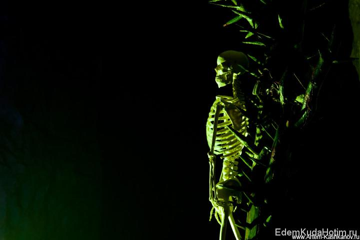 Таинственный скелет в призрачном свете