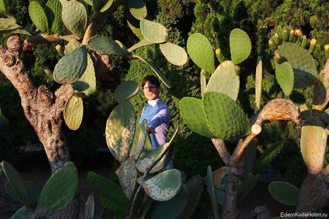 Наталья в кактусах