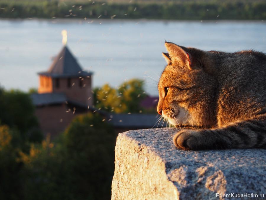 Кремлевский Кот